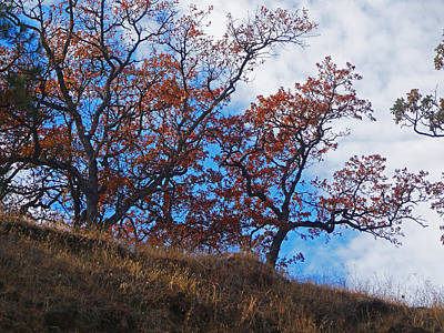 Photograph - The Ladies Of Autumn by Jacqueline  DiAnne Wasson