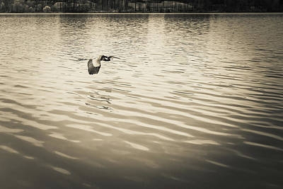 Photograph - The Lake #37 by Wade Brooks