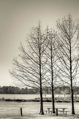 Photograph - The Lake IIi by Wade Brooks