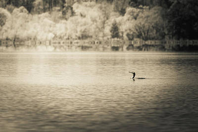 Photograph - The Lake Viii by Wade Brooks