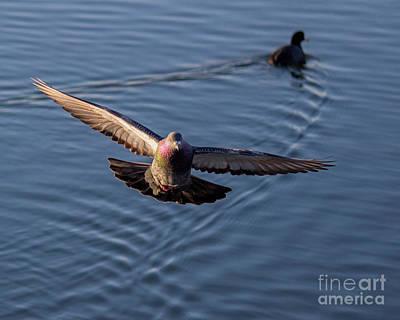 Photograph - The Landing by Cheryl Del Toro