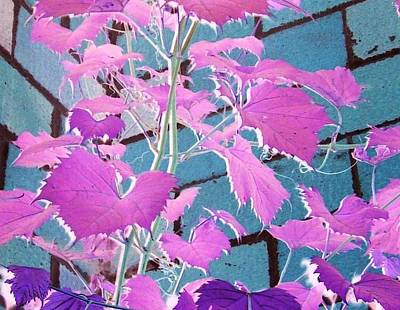 Purple Grapes Digital Art - The Language Of Fuschia by Ruth Koob