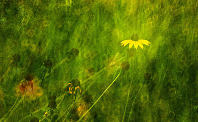 Photograph - The Last Black-eyed Susan by  Onyonet  Photo Studios