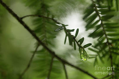 Photograph - The Last Drop by Mike Eingle