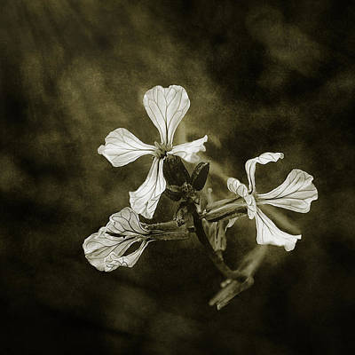 The Last Flowers Of Autumn Art Print by Scott Norris