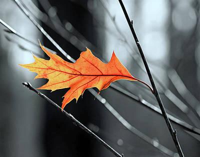 Photograph - The Last Leaf by Carolyn Derstine