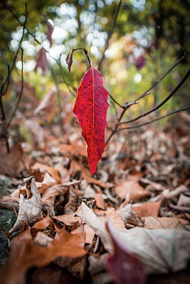 Photograph - The Last Leaf by Framing Places