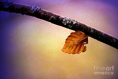 Photograph - The Last Leaf by Judi Bagwell
