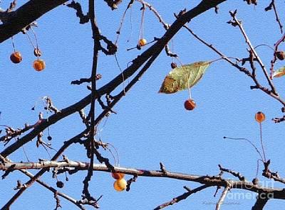 Photograph - The Last Leaf by Kathie Chicoine