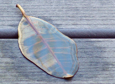 Photograph - The Last Leaf Of Lothlorien by Kevin Callahan