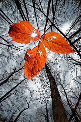 Winter Animals Rights Managed Images - The last leaf of November Royalty-Free Image by Robert Charity