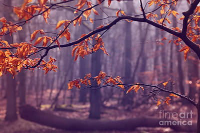 Hjbh Photograph - The Last Leaves... by LHJB Photography