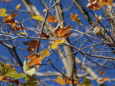 Photograph - The Last Leaves Of Autumn by Mike M Burke