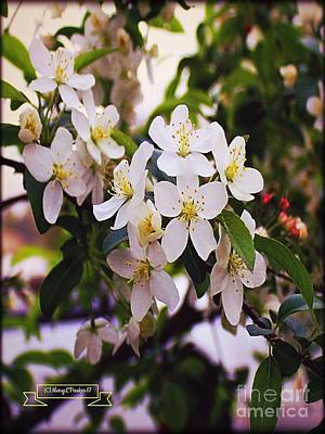 Photograph - The Last Of The Mock Orange Flowers  Copyright Mary Lee Parker . by MaryLee Parker