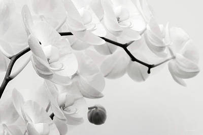 Photograph - The Last Orchid by Wim Lanclus