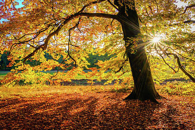 Photograph - The Last Rays Of Golden Autumn by Dmytro Korol