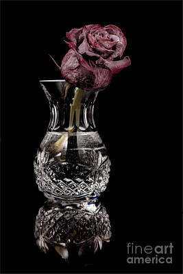 Photograph - The Last Rose by Jim Crawford