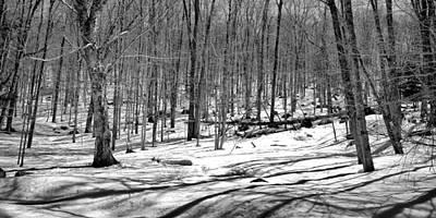 The Last Snow On The Maple Ridge Trail Art Print