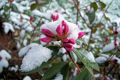 Photograph - The Last Snowfall by Janet Pugh