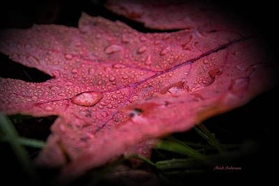 Photograph - The Last Tear Of Summer by Mick Anderson