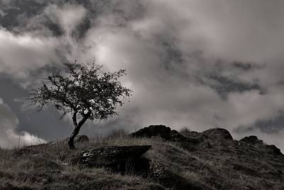 The Last Tree Art Print by Sean Wareing