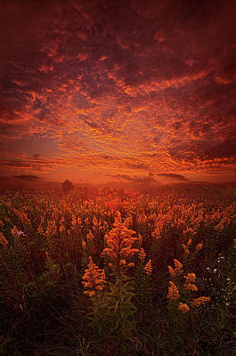 Photograph - The Last Untold Story by Phil Koch