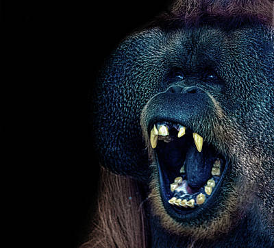 The Laughing Orangutan Art Print by Martin Newman