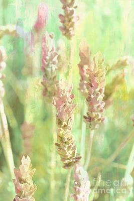 Computer Generated Flower Photograph - The Lavender Meadow by Clare Bevan