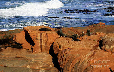 Photograph - The Lazy Lounging Seals by Nareeta Martin