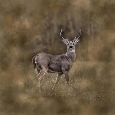 Photograph - The Leader - Whitetail Buck Deer Art by Jai Johnson