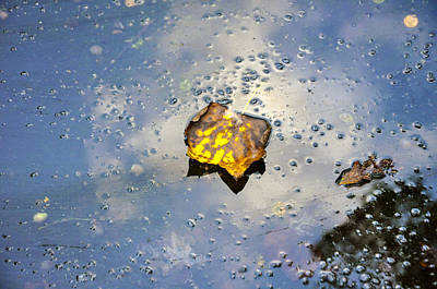 Photograph - The Leaf And Liquid Sky by Allen Carroll