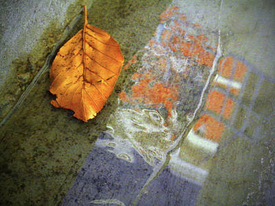 Photograph - The Leaf And The Reflections by Tara Turner