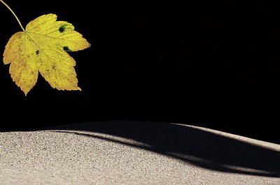 Photograph - The Leaf by Michael Mogensen