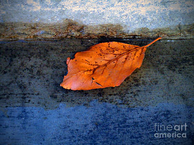 Photograph - The Leaf On The Stairs by Tara Turner