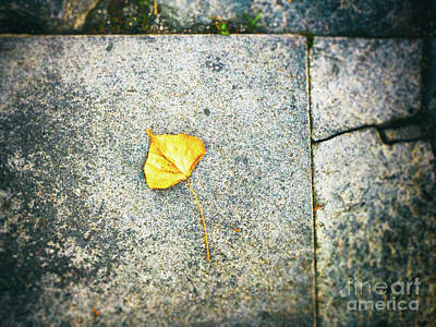 Photograph - The Leaf by Silvia Ganora