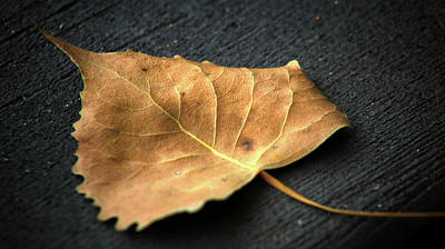 Photograph - The Leaf by Steve ODonnell