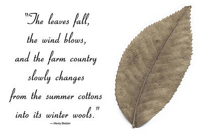 Photograph - The Leaves Fall by CE Haynes