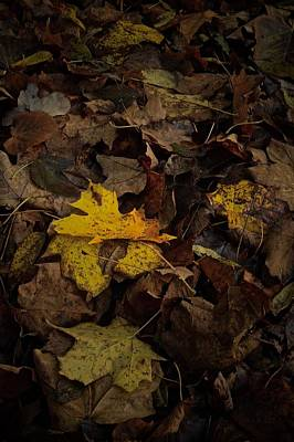 Photograph - The Leaves Of Fall by Photography by Tiwago