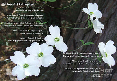 Photograph - The Legend Of The Dogwood by Andrea Anderegg