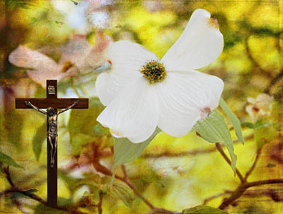 Photograph - The Legend Of The Dogwood by Judy Vincent