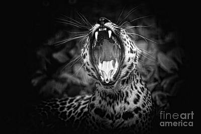 Photograph - The  Leopard's Tongue Rolling Roar by Mary Lou Chmura