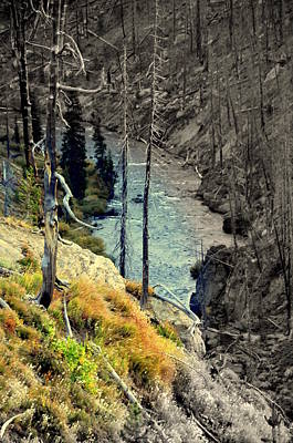 Yellowstone Digital Art - The Life Is Coming Back by Aron Chervin