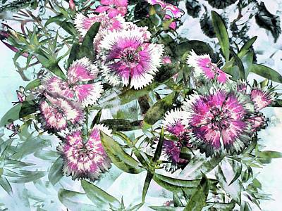 Photograph - The Life Of Dianthus by Dorothy Berry-Lound
