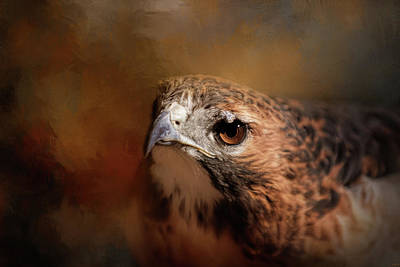 Photograph - The Light In Her Eye Hawk Art by Jai Johnson