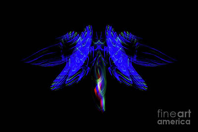 Photograph - The Light Moth by Steve Purnell