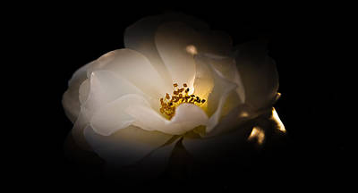The Light Of Life Art Print by Loriental Photography