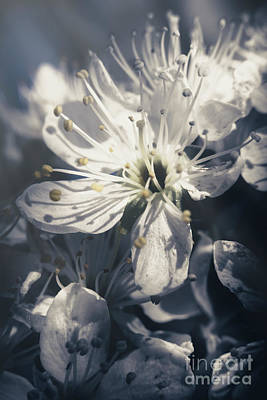 Blue Floral Photograph - The Light Of Spring Petals by Jorgo Photography - Wall Art Gallery