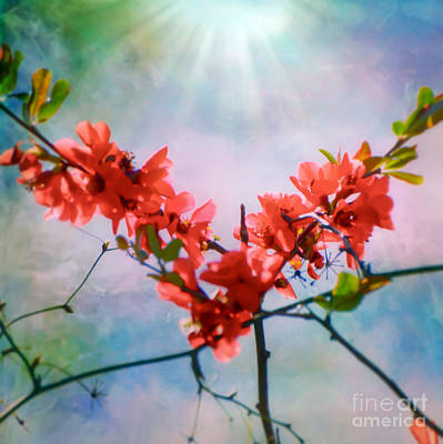 Photograph - The Light Of The Heart by Kerri Farley