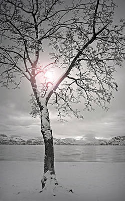 Photograph - The Light Shines In Winter by Tara Turner