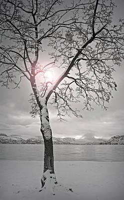Skaha Lake Photograph - The Light Shines In Winter by Tara Turner